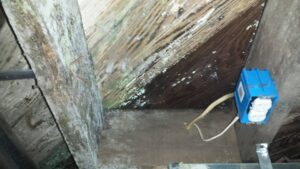 Basement Mold Remediation NJ