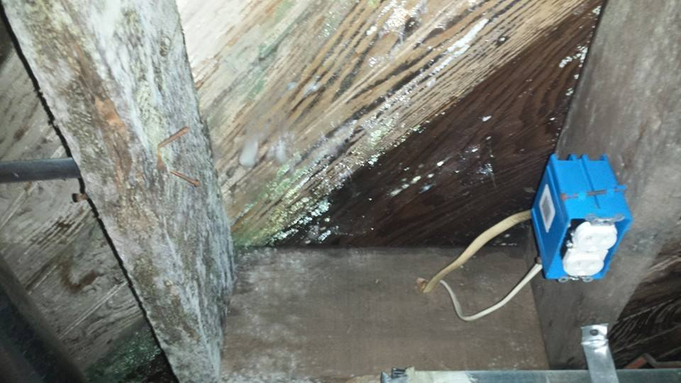 Mold Remediation In New Jersey