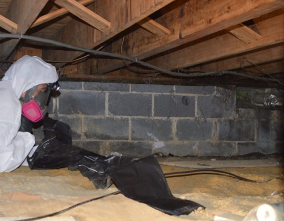 crawl space mold removal Lake Como