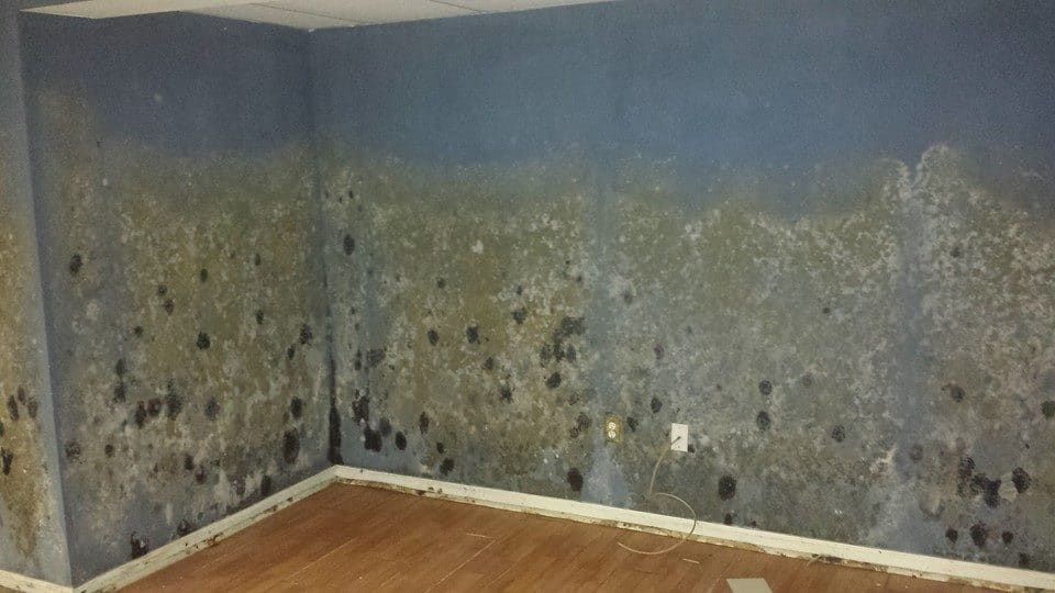 Mold Remediation Monmouth County NJ