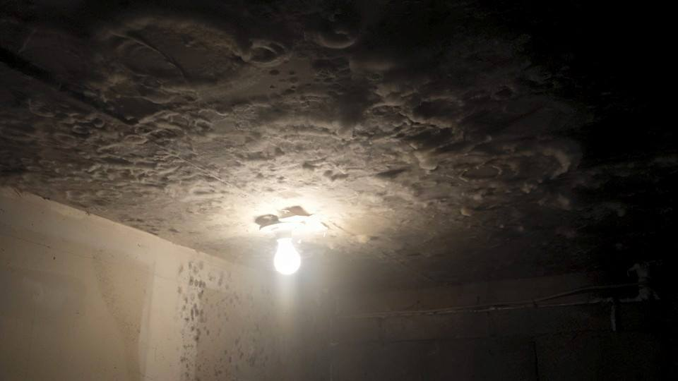 Basement Mold Howell